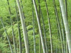 Ybin et la mer de bambous