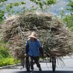 Dali, en vélo vers le lac Erhai