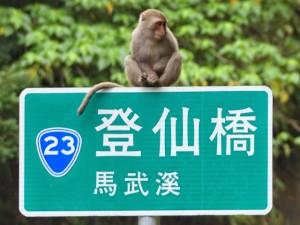 Comté de Taitung. De Donghe (東河 ) à Fuli